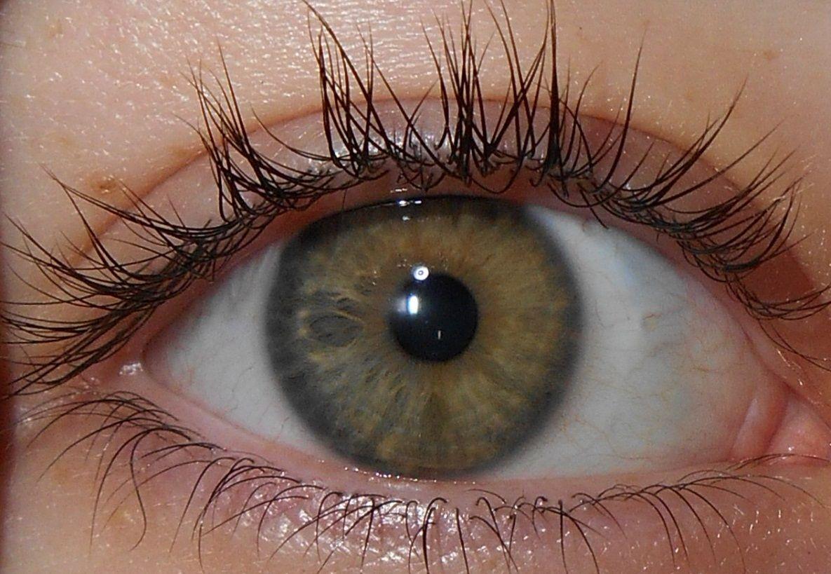 El color de ojos: un estudio con aplicación en ciencias forenses